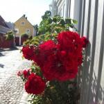 Arboga 064