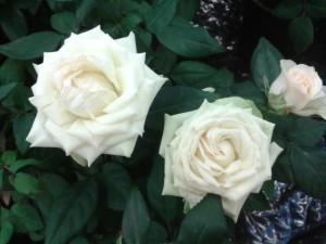 jan 14 snö blommor 008