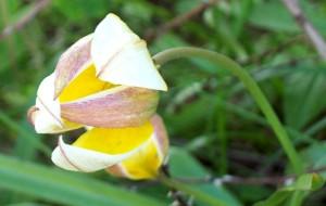 Namnlösvår blomma